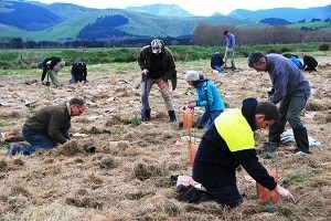 Volunteers contributing to the new Ahuriri landscape.