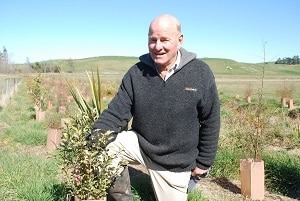 Protective guards guarantee close to 100 per cent survival of native seedlings planted along a tributary of Happy Jack Creek.