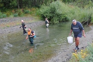 A combined ream from Ngāi Tahu and Environment Canterbury look for stranded fish in the last pools of the Rakahuri/Ashley River.