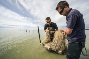 Dr. Phil Jellyman (left) and Dr. Shannan Crow (right) collecting longfin and shortfin eels in Te Waihora (Lake Ellesmere). Photograph by Dave Allen.