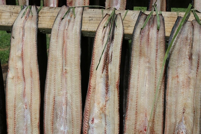 The tuna (eel) catch hung out to dry.