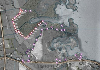 Harts Creek trapping site. Image courtesy of DOC.